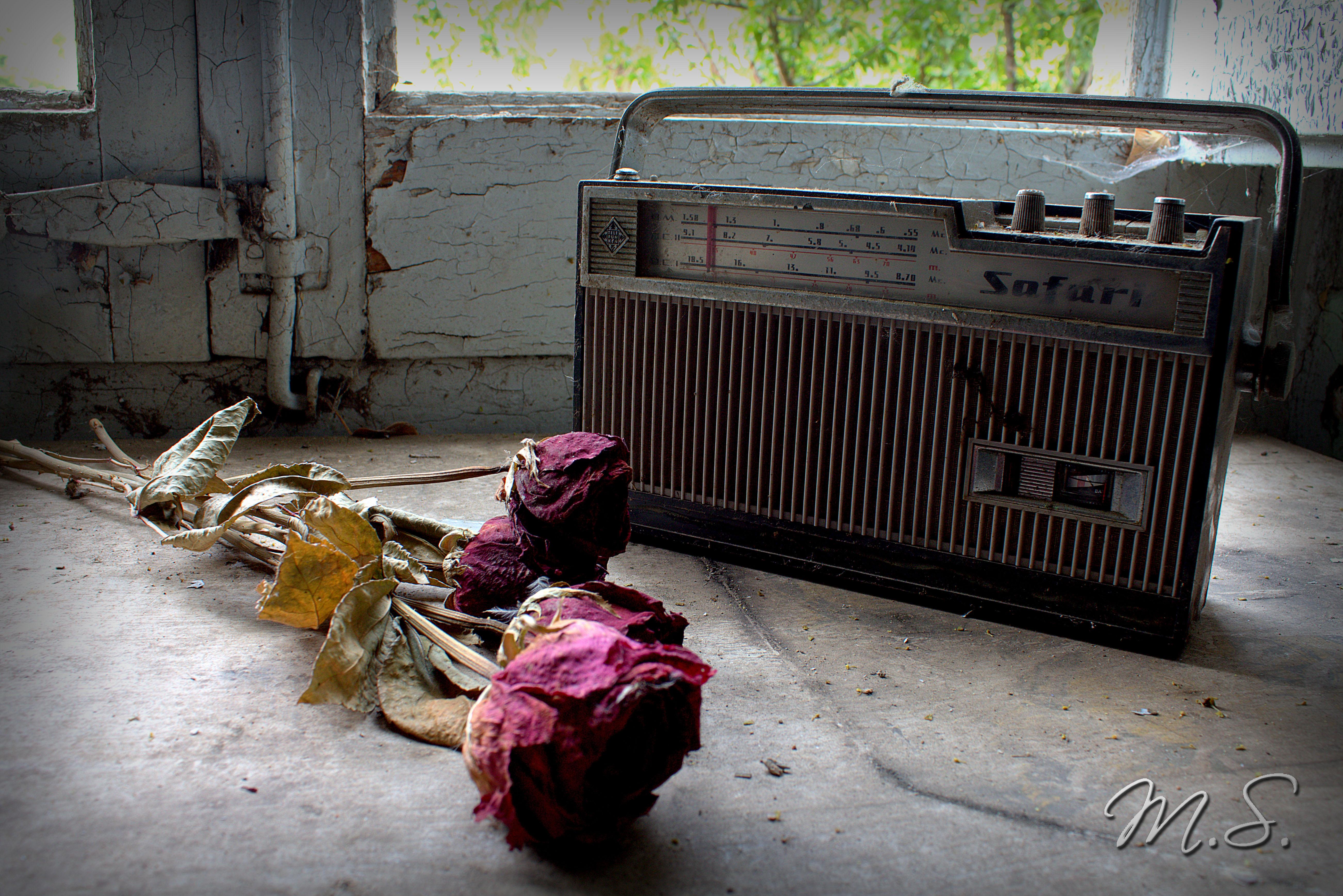 rosas y radio